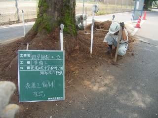 除草と表層土撤去